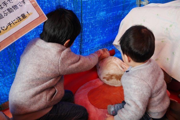 花博記念公園ハウジングガーデン、大阪住宅センター、猫